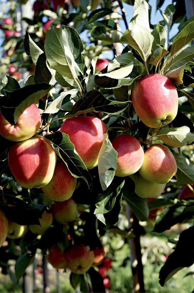 æbler med gele